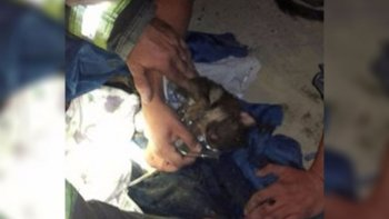 bomberos reanimaron un cachorro con masajes cardiacos y oxigeno
