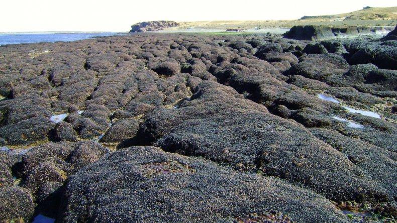 Recuerdan áreas de Chubut  afectadas por la Marea Roja