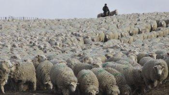 La provincia de Chubut se puso firme y no acompañó el nuevo esquema de distribución de la ley ovina.