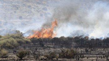 Las llamas consumieron gran cantidad de álamos, árboles añejos que formaban una cortina de reparo del viento en el complejo de canchas.