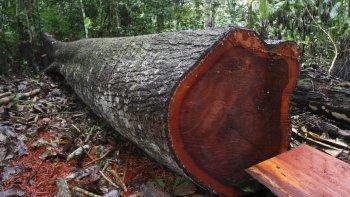 Murió un hombre aplastado por un árbol que talaba