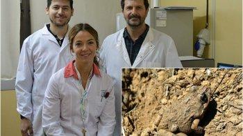 una rana chubutense que podria curar infecciones