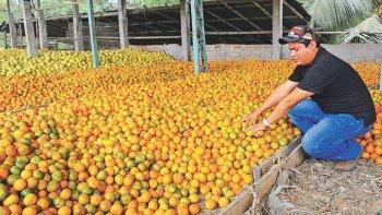 La mandarina es el producto donde se nota más la diferencia entre lo que cobra el productor y lo que luego debe pagar el consumidor por esa fruta.