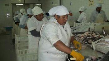 El trabajo en las fábricas que procesan merluza en la ciudad presenta hoy la misma situación que la de los productores de manzanas o de leche en el norte.