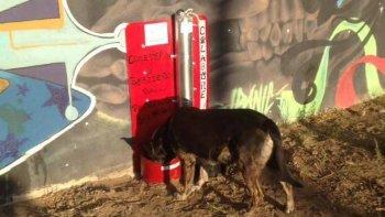 instalaron un comedero y bebedero para perros sin hogar