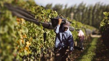 Chubut apostará a potenciar actividades como la vitivinicultura como alternativa al desarrollo de la minería.