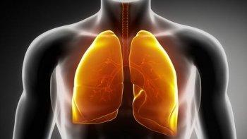 descubrieron una nueva funcion clave de los pulmones