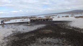 En la estancia El Sacrificio la familia González aún intenta salvar sus ovejas, que quedaron atrapadas en el lago Colhué Huapi, un sector que prácticamente estaba seco previamente al temporal.