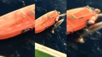 salto 12 metros de altura para salvar a una ballena