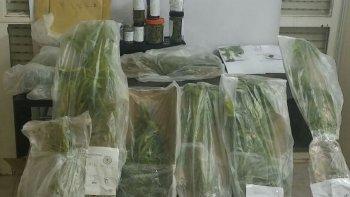 secuestran plantas de marihuana, pesos y dolares