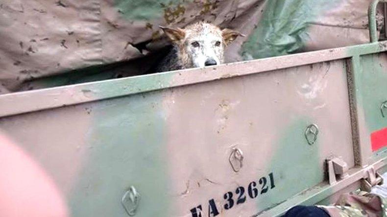 La emocionante historia de una mascota perdida en el temporal