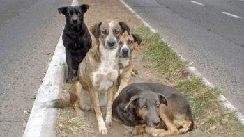 Preocupación por los perros sueltos en un sector de Km 5