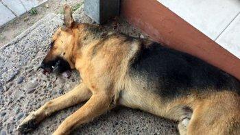 Mató a un perro porque le ladraba al suyo