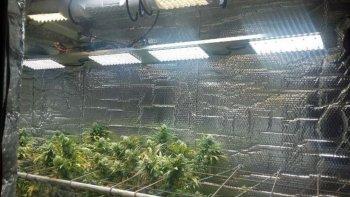 Desmantelaron un invernadero de marihuana de alta tecnología