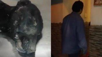 Murió el perro que agonizó cuatro días ante la indiferencia de dueños y vecinos