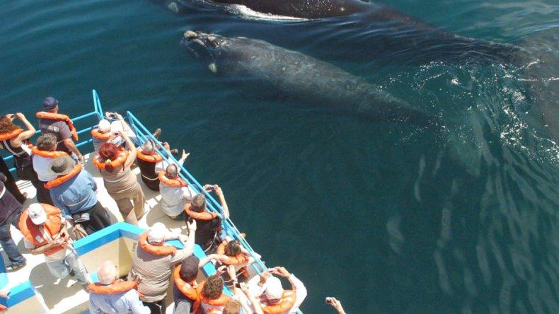 Empiezan a llegar los primeros ejemplares al Golfo nuevo y Península Valdés