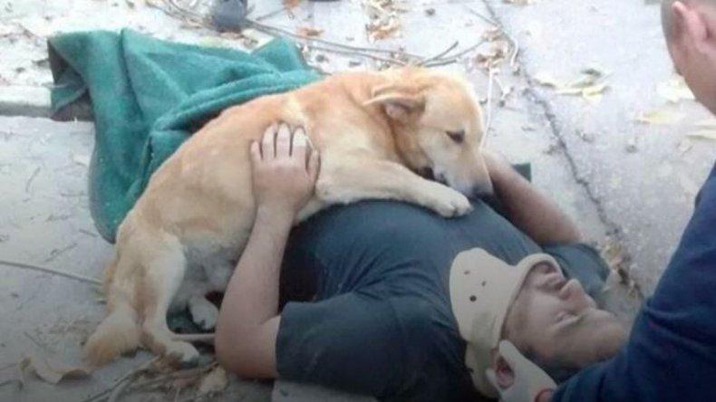 Sufrió un accidente y su perro se quedó a cuidarlo