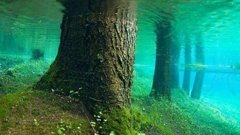 El bosque sumergido recrea un paisaje de fantasía