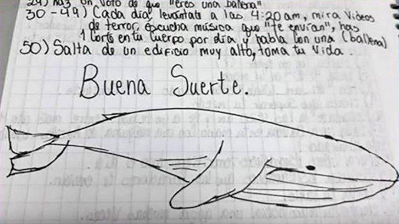 Investigan la posible llegada de la Ballena Azul a Chubut