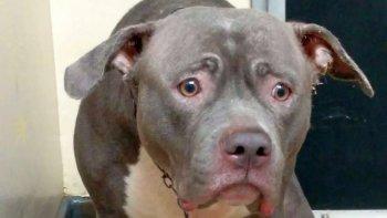 la reaccion de una perra cuando se da cuenta que su familia la abandono