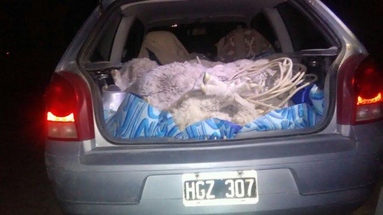 Detuvieron a un hombre por abigeato: llevaba nueve ovejas en el baúl