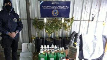 operativo vivero narco: allanaron un domicilio y decomisaron armas