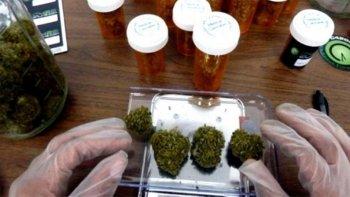 proponen hacer un registro de pacientes que usan cannabis
