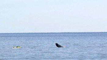 ballenas en costas de kilometro 3 con testigos privilegiados