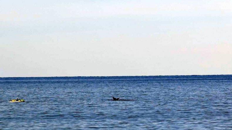 Ballenas en costas de Kilómetro 3 con testigos privilegiados