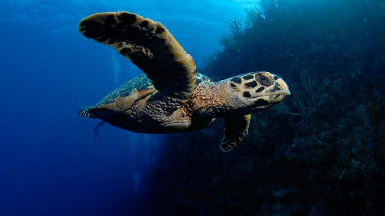 La tortuga es uno de los animales más icónicos que aún representan hoy al destino.