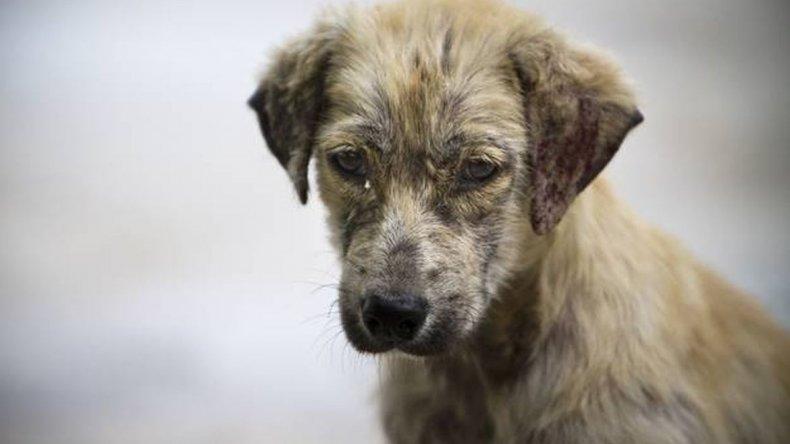 Quienes adopten perros de la calle podrían pagar menos impuestos