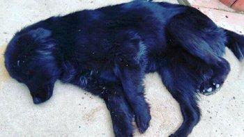 Mañana se realiza una nueva jornada de adopción de mascotas