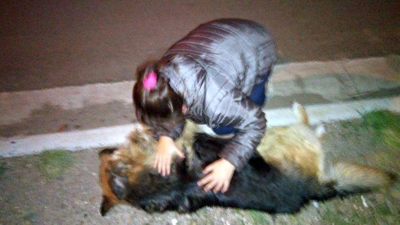 Denuncia a chofer de colectivo por atropellar a su mascota