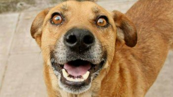 llevan adelante una nueva jornada de adopcion de mascotas