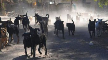 ushuaia en emergencia socio ambiental por los ataques de jaurias