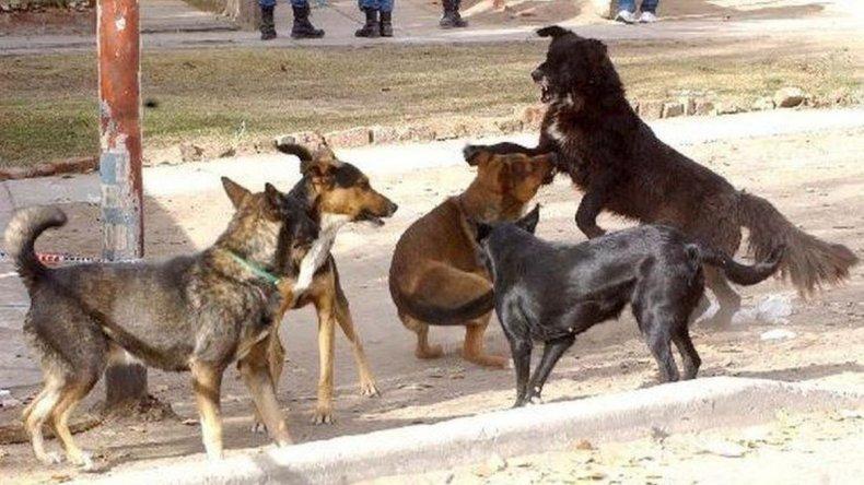 Inspección y relevamiento en Laprida por perros mordedores