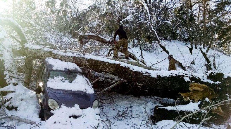 Las intensas nevadas generaron la caída de árboles en las rutas cordilleranas de Río Negro y Neuquén.