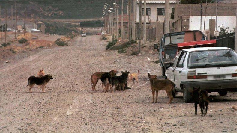 La presencia de perros en las calles es una problemática que se extiende en todo el ejido de Comodoro Rivadavia.