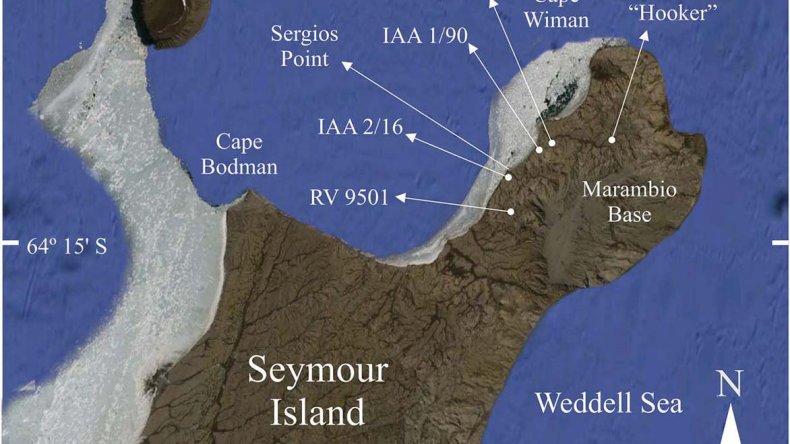 Descubren una nueva especie de mamífero en la Antártida de hace 50 millones de años
