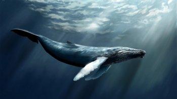 la historia de la ballena mas solitaria del mundo
