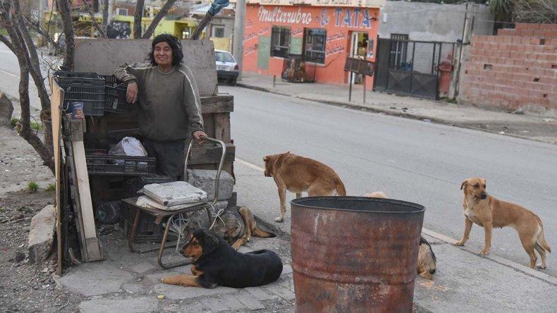 El nuevo ataque replantea la polémica acerca de qué hacer con tantos perros sueltos en la ciudad.