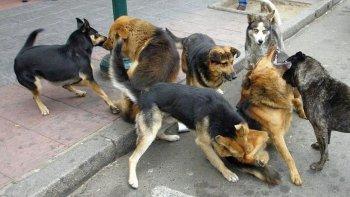 en laprida levantaran y castraran perros callejeros