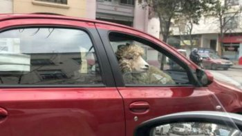 Misterio: un hombre pasea en su auto con una oveja