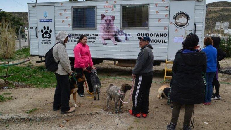 Castración de animales y charlas de concientización en Laprida