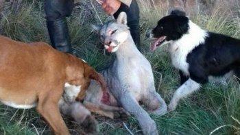 mas de 10 mil personas piden detener el exterminio del puma en argentina