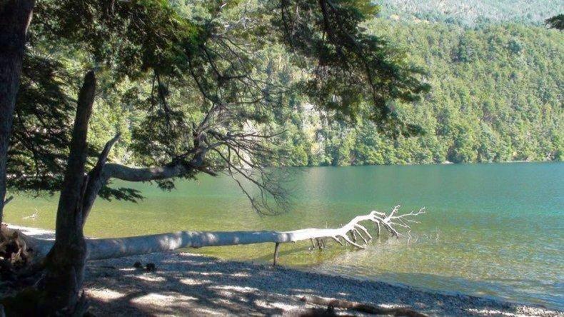 Destinan más de 3 millones de  pesos a la restauración de bosques