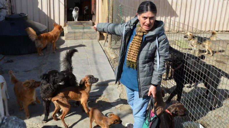 Viviana Alma Montiel protege actualmente en su casa del barrio 26 de Junio a medio centenar de perros de raza indefinida. A la mayoría los recogió en las calles y a otros se los dejó gente que se cansó de ellos.