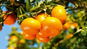 la mandarina tenia un agrotoxico prohibido