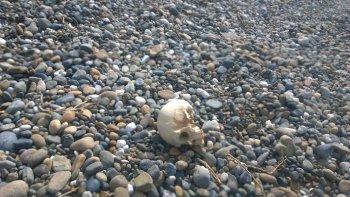 El cráneo que un pescador encontró el viernes en Barrancas Blancas.