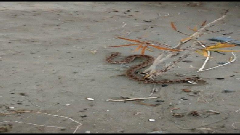 Alerta por presencia de serpientes en Caleta Córdova